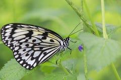 Бабочка на макросе цветка Стоковые Фото