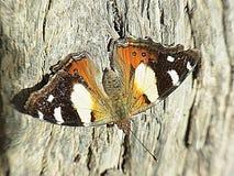 Бабочка на пне дерева Стоковые Фото