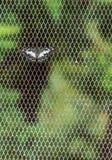 Бабочка на пойманной сетью предпосылке Стоковые Изображения