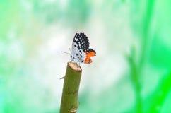 Бабочка на розовом хоботе Стоковые Изображения