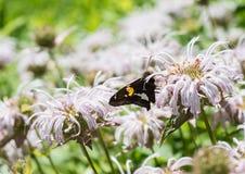 Бабочка на розовом цветке Стоковые Изображения RF