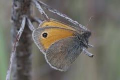 Бабочка на ручке Стоковое Изображение