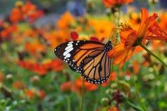 Бабочка на саде. Стоковое Изображение