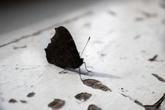 Бабочка на старом силле окна стоковые изображения rf