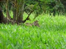 Бабочка на траве Стоковое Изображение