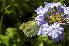 Бабочка на фиолетовом flower-2 Стоковые Фото