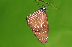 Бабочка на хворостине, Стоковые Фото