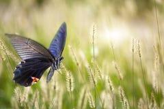 Бабочка на цветках Стоковое Изображение RF