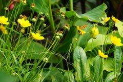 Бабочка на цветках Стоковые Фотографии RF