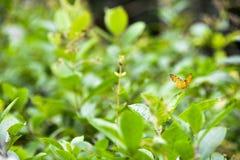 Бабочка на цветке и листьях Стоковая Фотография RF