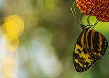 Бабочка на цветке с расплывчатой предпосылкой Стоковое Изображение