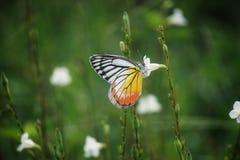 Бабочка на цветке стоковое фото rf