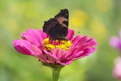 Бабочка на цветке Стоковые Фотографии RF