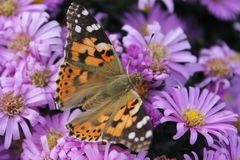 Бабочка на цветке стоковые изображения rf