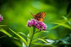 Бабочка a на цветке стоковые изображения rf