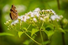 Бабочка на цветке Стоковые Изображения