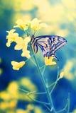Бабочка на цветке Стоковое Фото