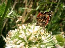 Бабочка над цветком Стоковые Изображения