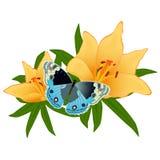 Бабочка на flower-2 Стоковые Изображения