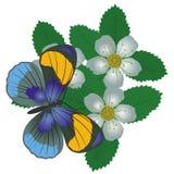 Бабочка на flower-3 Стоковые Фотографии RF