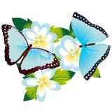 Бабочка на flower-5 Стоковые Фото