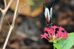 Бабочка на flower2 Стоковые Изображения RF