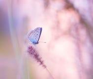Бабочка на wildflower стоковые изображения