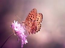 Бабочка на wildflower стоковые изображения rf