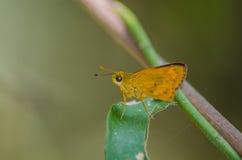 бабочка немногая Стоковое Фото