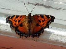 бабочка немногая Стоковые Изображения