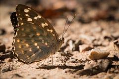 бабочка немногая стоковые фотографии rf