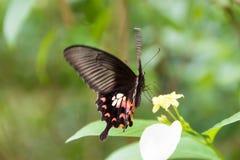 Бабочка нерезкости движения летания роится желтый цветок, селективное foc Стоковые Фото
