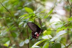 Бабочка нерезкости движения летания роится желтый цветок, селективное foc Стоковое фото RF