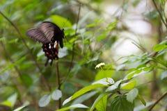 Бабочка нерезкости движения летания роится желтый цветок, селективное foc Стоковое Изображение RF