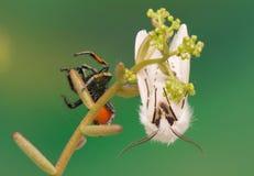 Бабочка ночи и скача паук Стоковое фото RF
