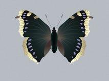 Бабочка оплакивая плаща Иллюстрация вектора