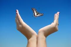бабочка освобождает Стоковые Фотографии RF