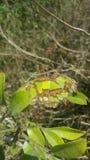 бабочка освобождает Стоковые Фото