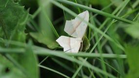Бабочка отдыхая в траве Стоковые Изображения