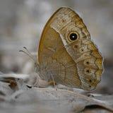 Бабочка отдыхая на умерших выходит на том основании Стоковые Изображения