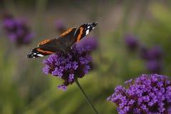 бабочка одиночная Стоковое фото RF