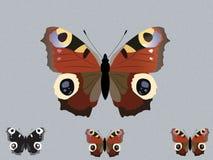 Бабочка павлина Иллюстрация штока