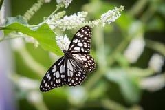 Бабочка подавая на дереве Стоковые Изображения
