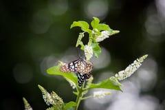 Бабочка подавая на дереве Стоковые Фотографии RF