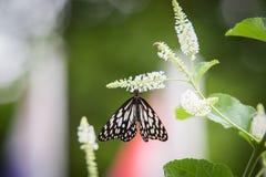 Бабочка подавая на дереве Стоковое Фото