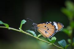 Бабочка подавая на дереве Стоковое Изображение
