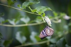 Бабочка подавая на дереве Стоковая Фотография