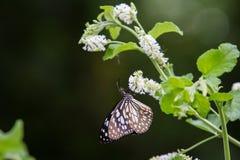 Бабочка подавая на дереве Стоковые Фото