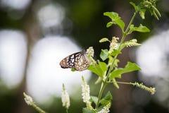 Бабочка подавая на дереве Стоковые Изображения RF