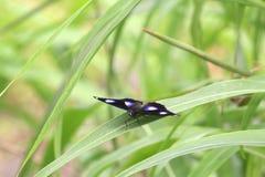 Бабочка природы красивая Стоковое фото RF